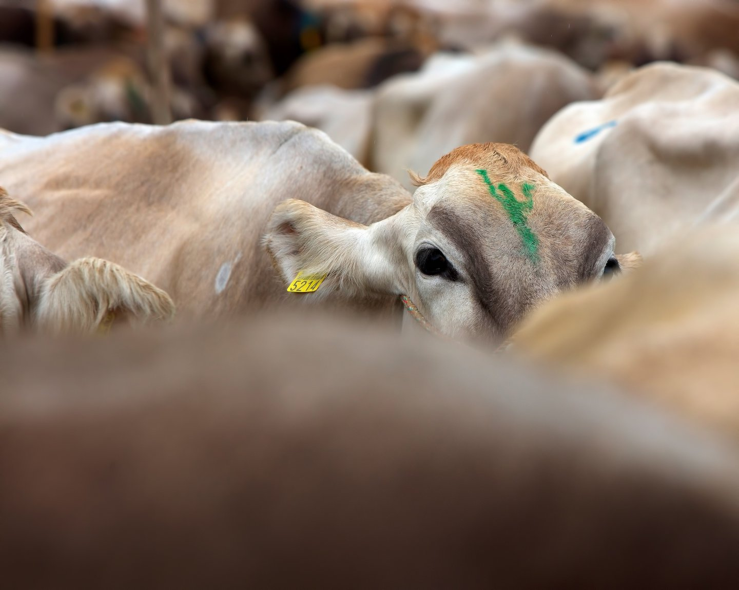 Livestock Farming Takes Up 41% of U.S. Land; and Your 5-A-Day