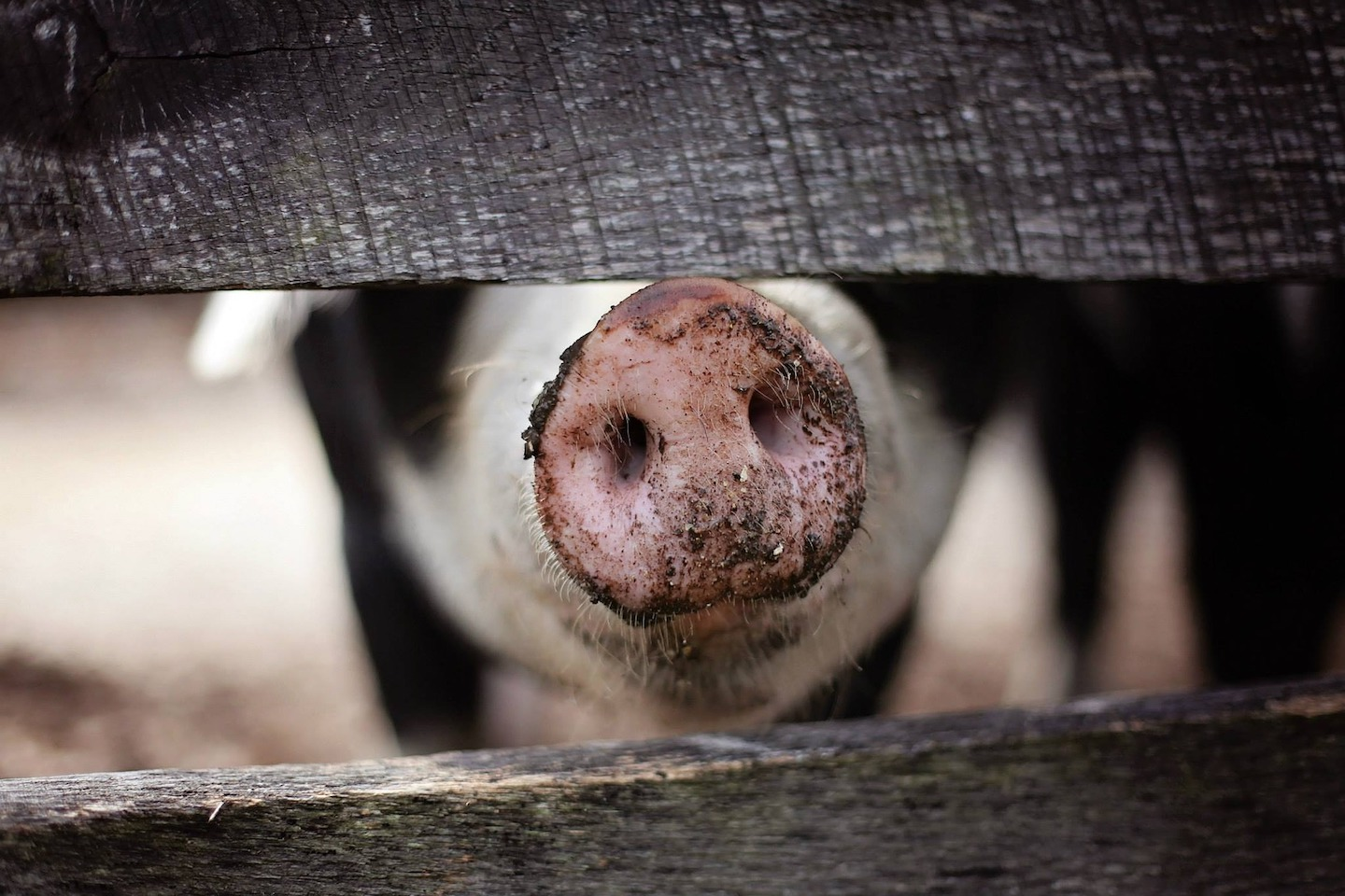 "What Are ""Ag-Gag"" Laws?"