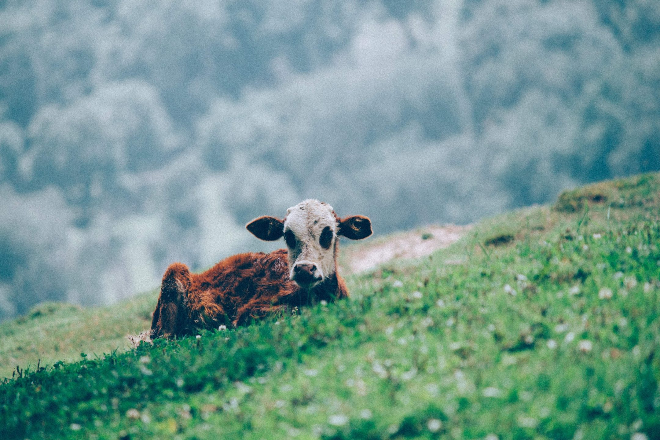 Read This Book: The Secret Life of Cows