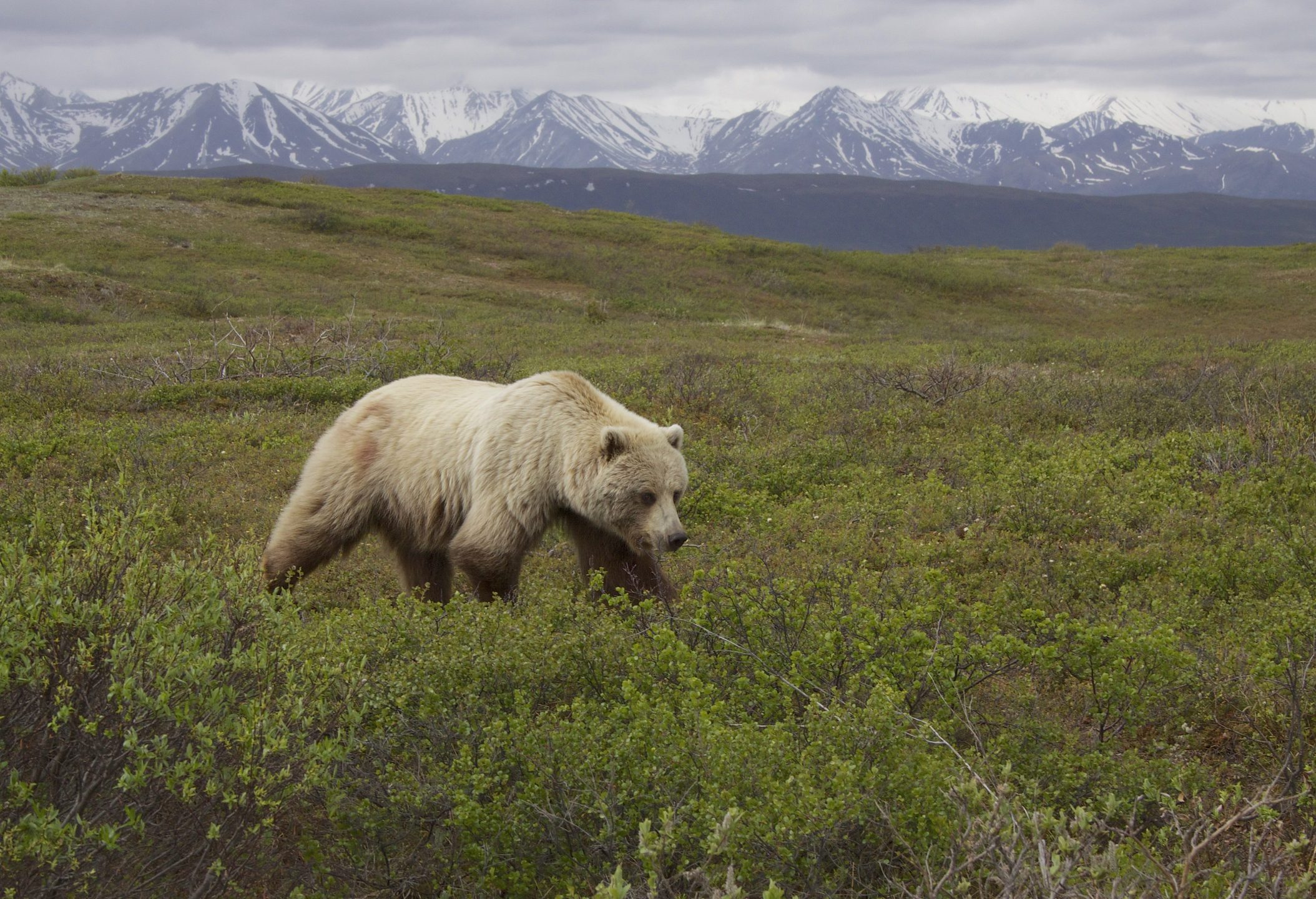 Judge Defends Yellowstone's Threatened Grizzly Bears; and Your 5-A-Day
