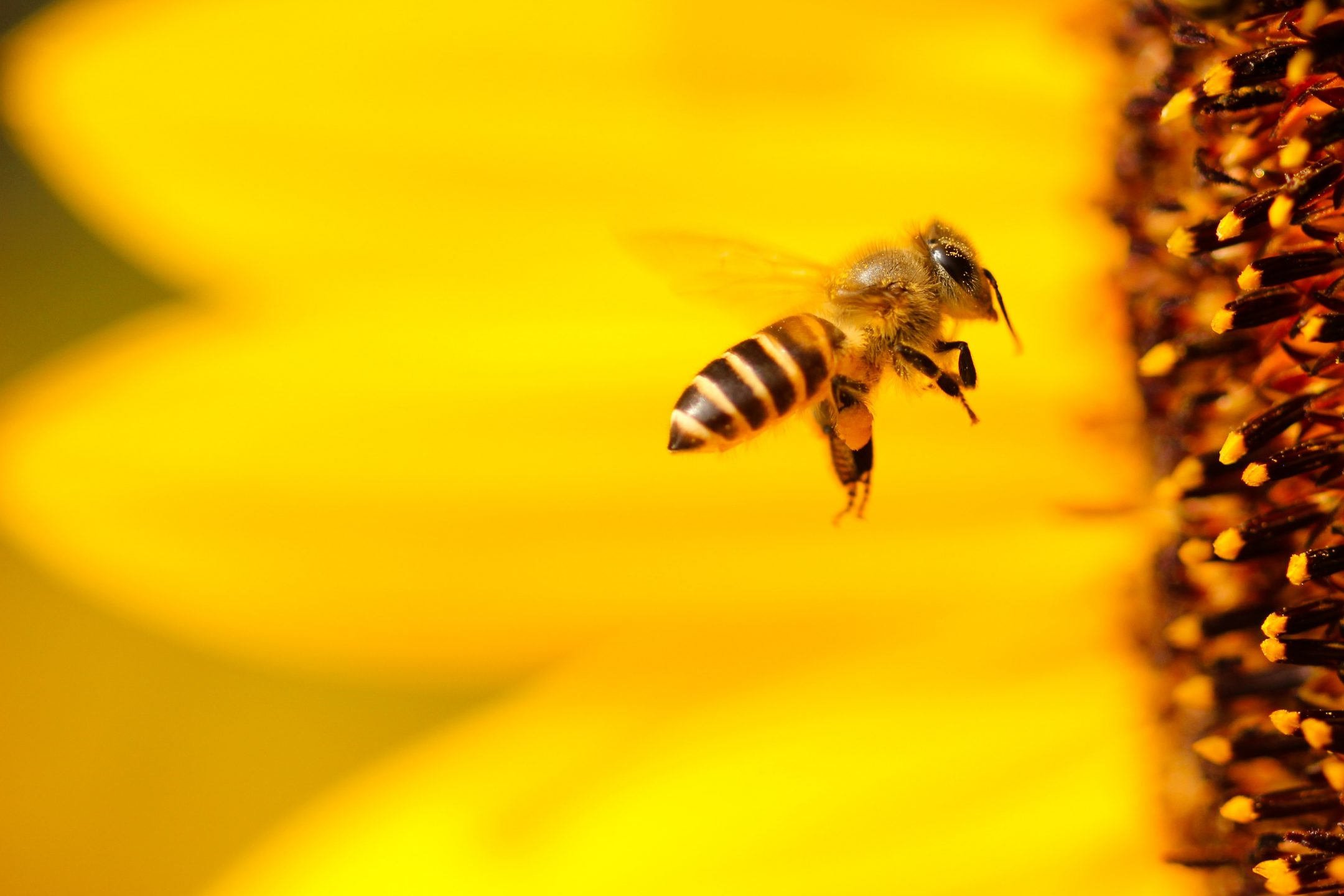 Wait… Bees Can Count? And Your 5-A-Day