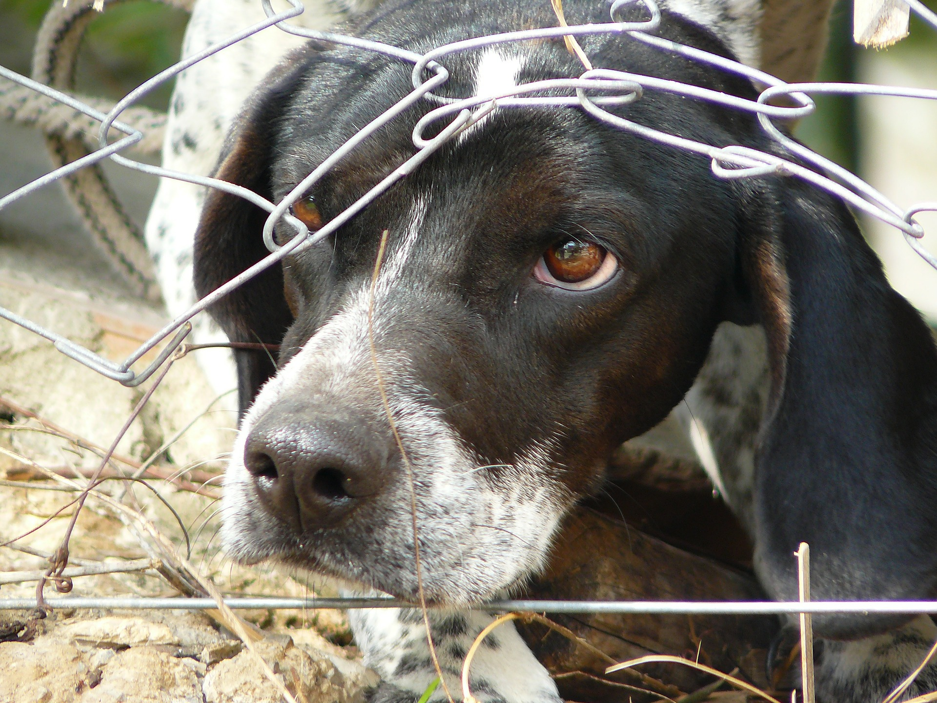 What Is the Animal Welfare Act of 1966?