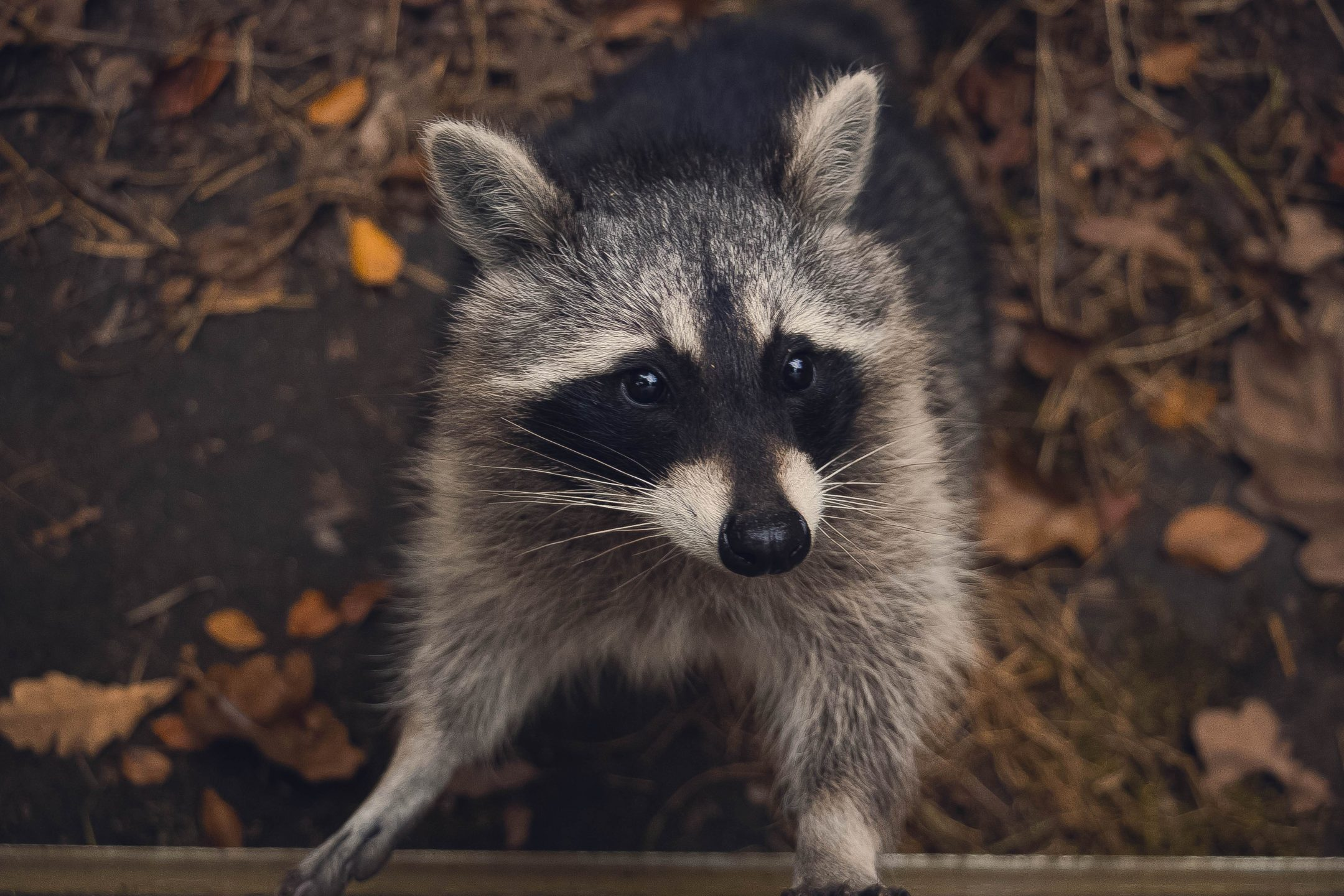 Smart Trash Cans, Smarter Raccoons; and Your 5-A-Day