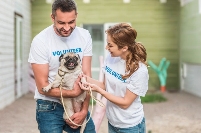 how to volunteer at animal shelter