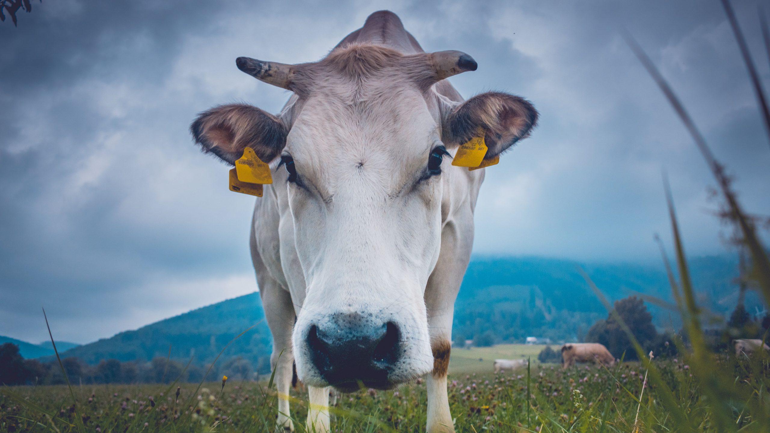Robots Won't Fix Animal Agriculture's Welfare Problem