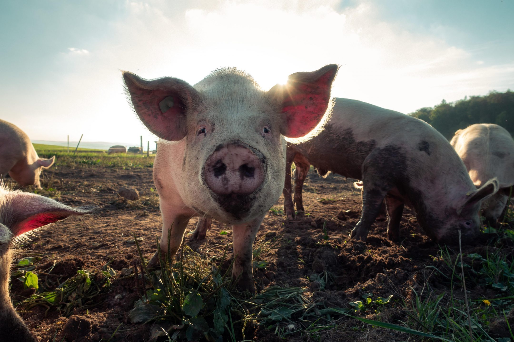 What Happens to Farm Animals When Natural Disaster Strikes?