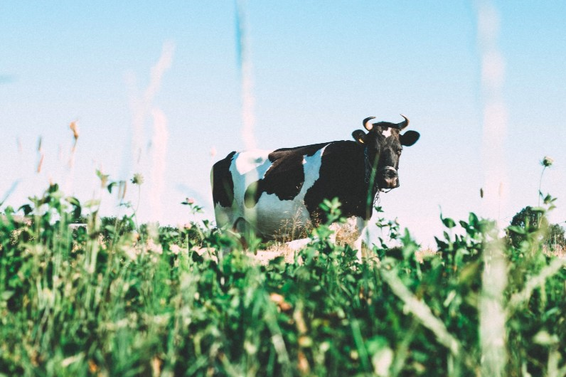 dairy farming statistics