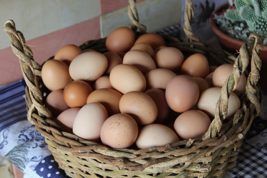 poultry farming layer hens