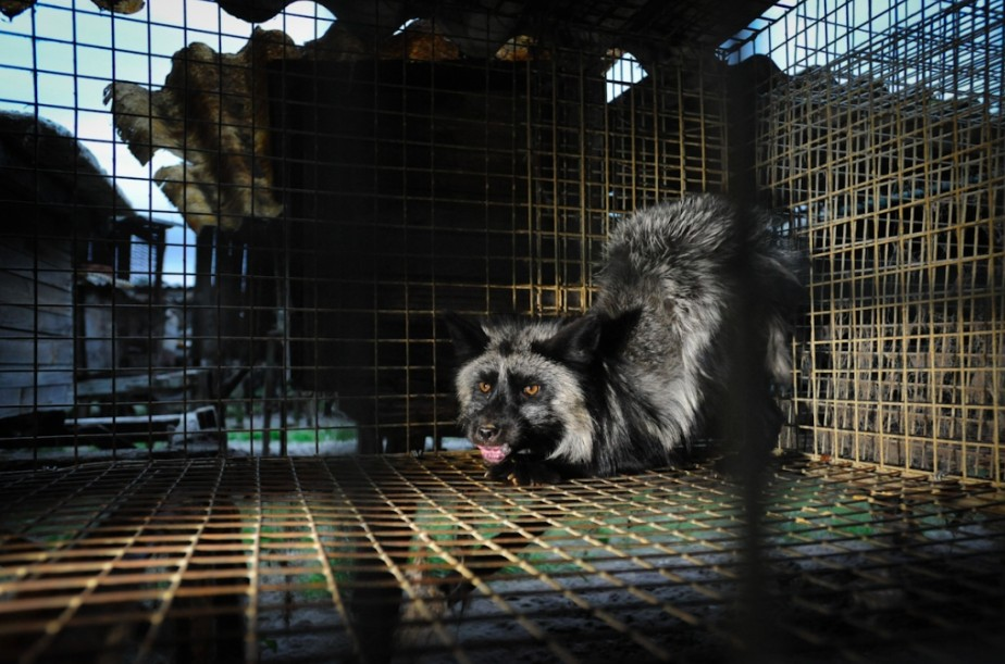 difference between farmed fur and wild fur