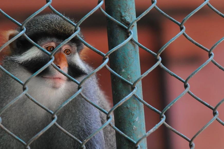 Animal Trafficking: The Wildlife Trade You Don't Want to Believe Exists