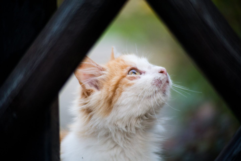 feral cat outside