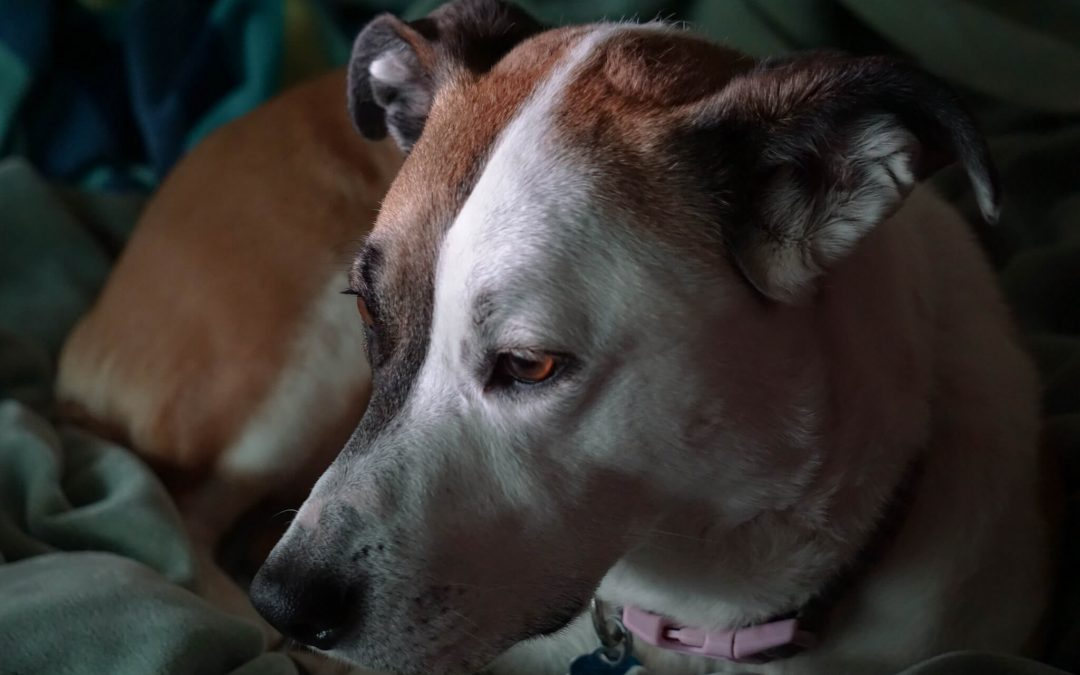 Animal Rescue Groups Often Have No Choice But Euthanasia