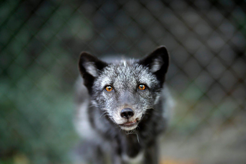 fur ban animal