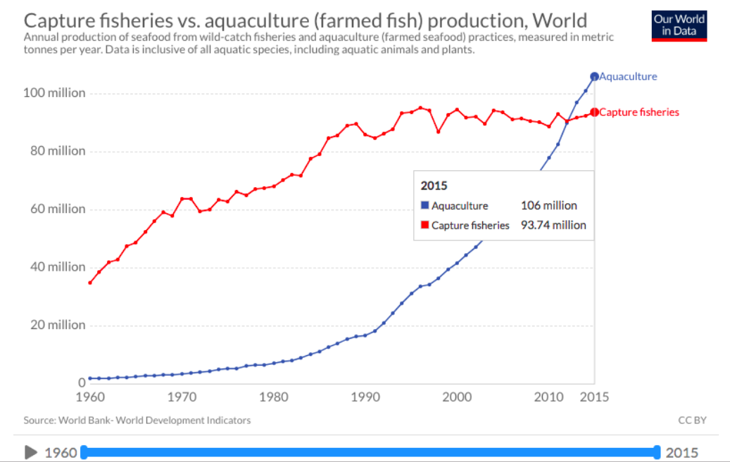 fish consumption growth