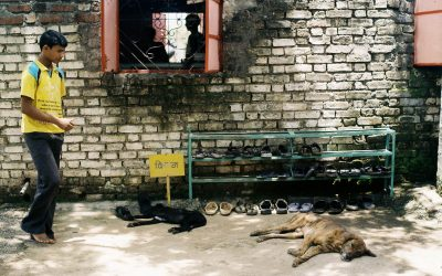 India Needs to Get Serious About Rabies Prevention
