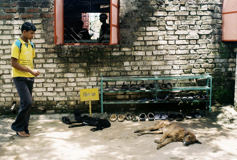 rabies dog India