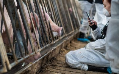 Animal Farmers Press Charges Against Activists, Cruelty Continues