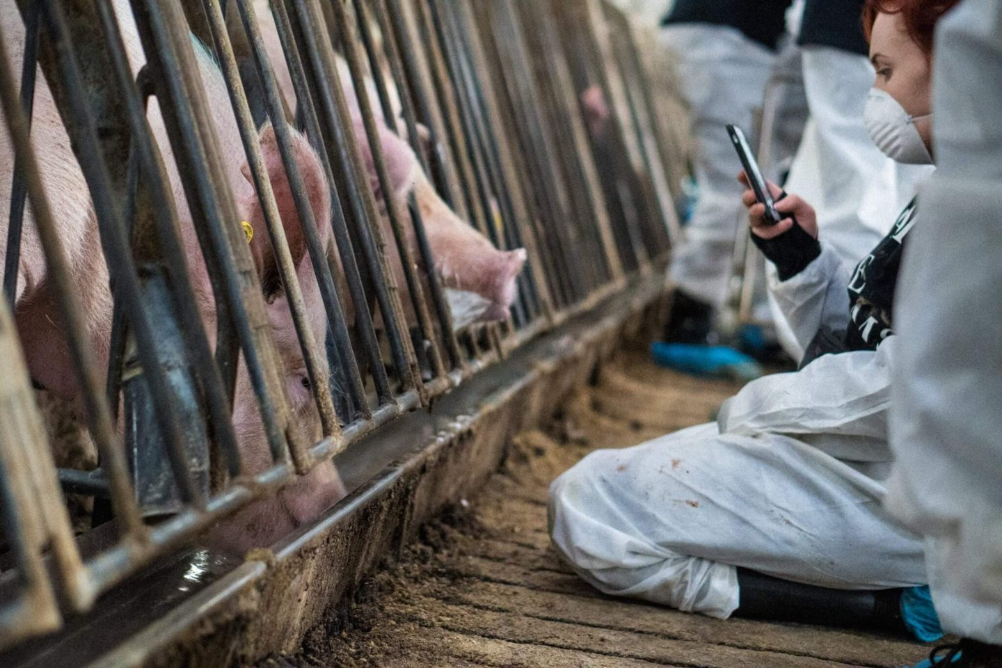 Animal Farmers Press Charges Against Activists, Cruelty