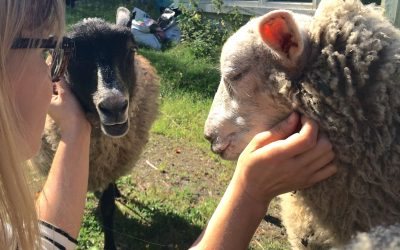 From Shepherd to Advocate: Why I Focus on Animal Suffering