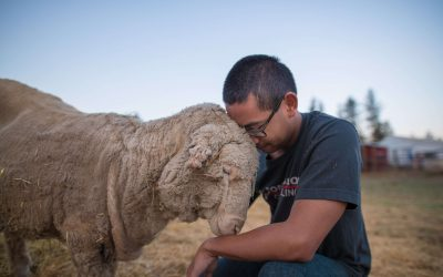 How Undercover Investigation of Lamb Slaughterhouse Led to Federal Prosecution
