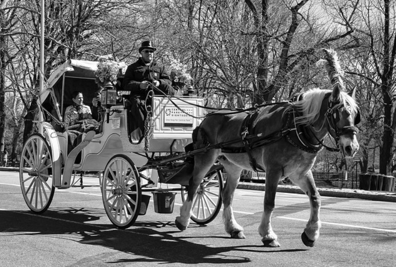 ban new york horse carriages