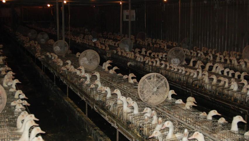 foie gras housing