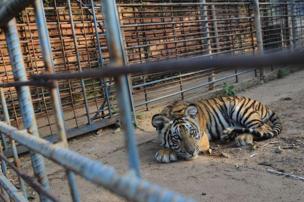Zoos Cause Animals Far More Harm Than Good