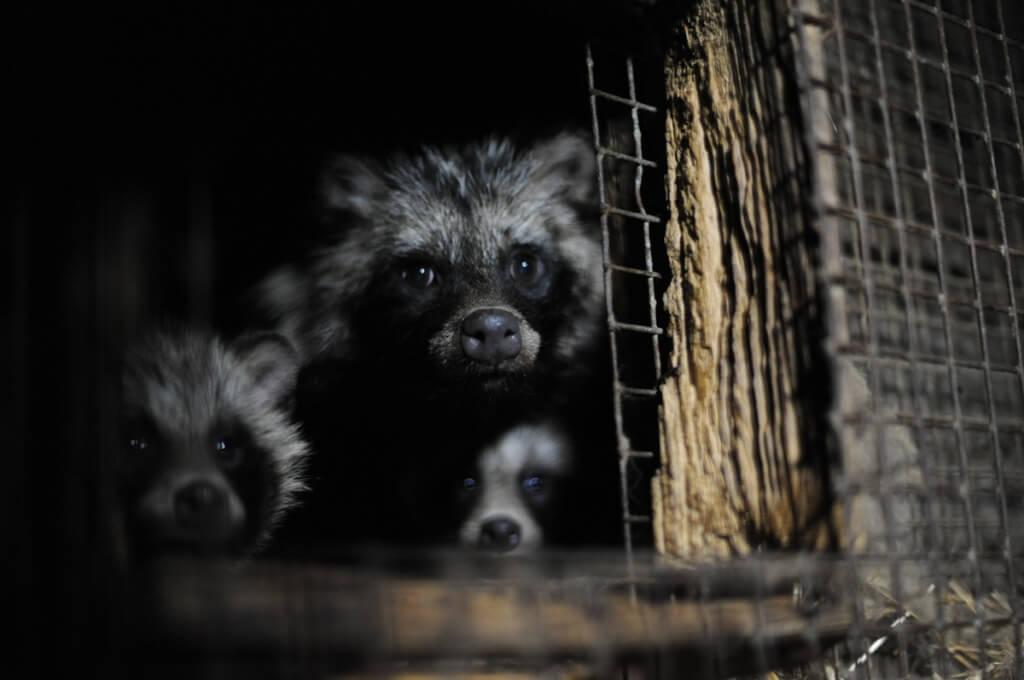 fur farming cage