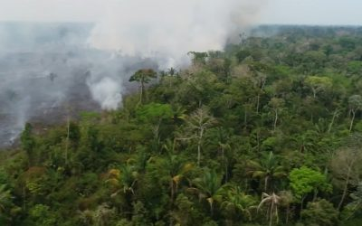 Drone Footage Shows Devastating Aftermath of Amazon Fires