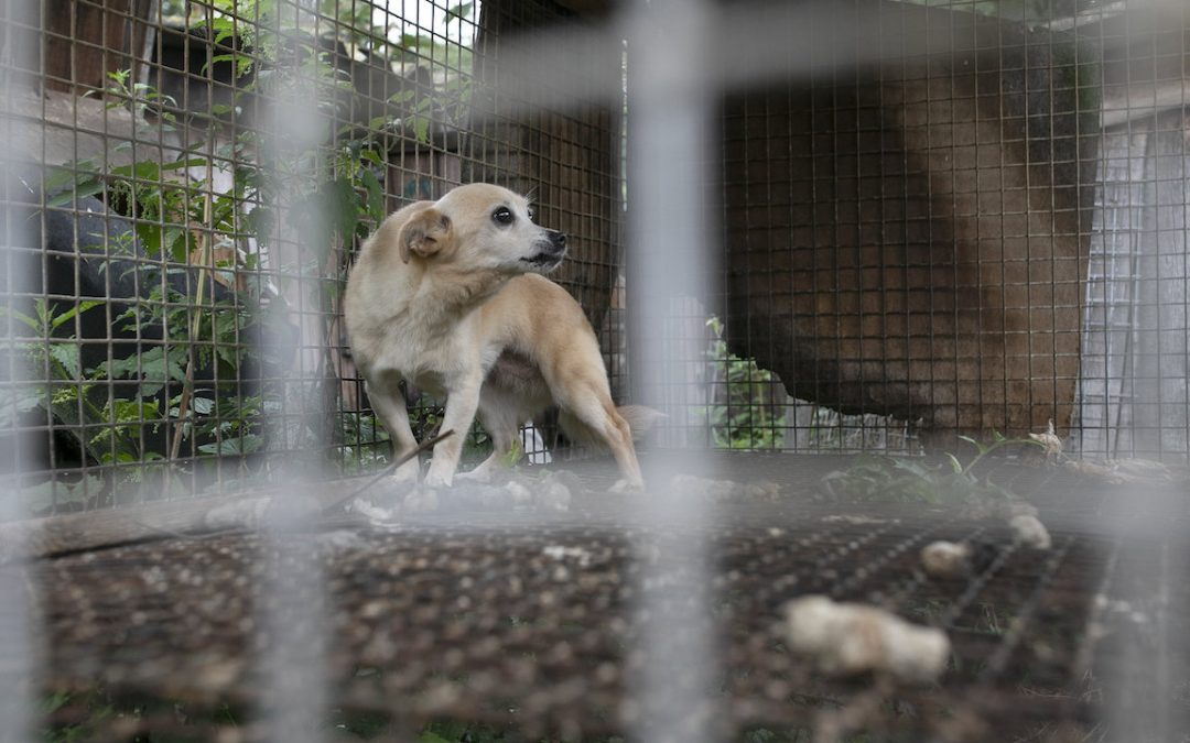 Dogs Found Starving, Neglected at Polish Fur Farm