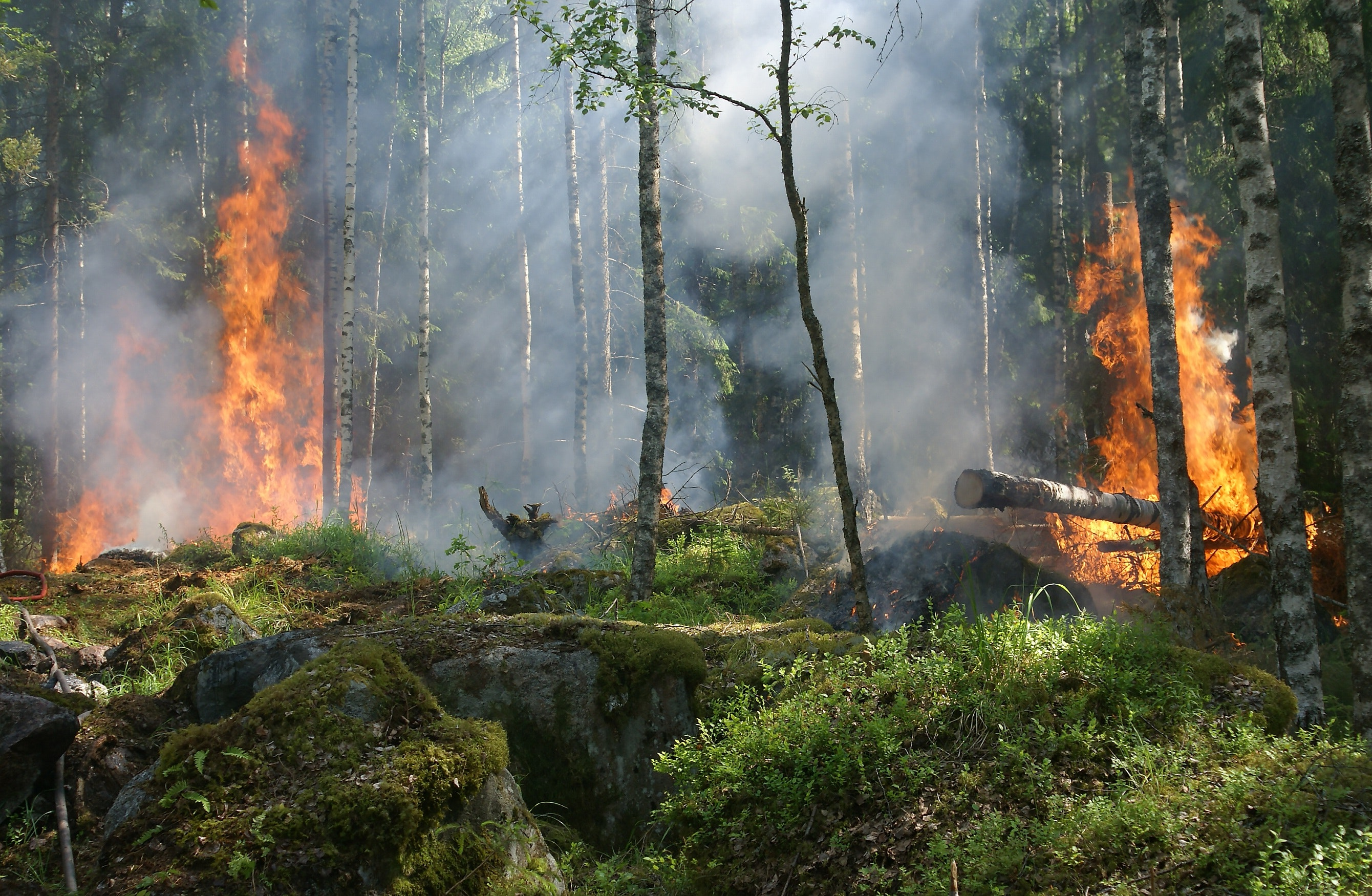 Forest Fire Burning