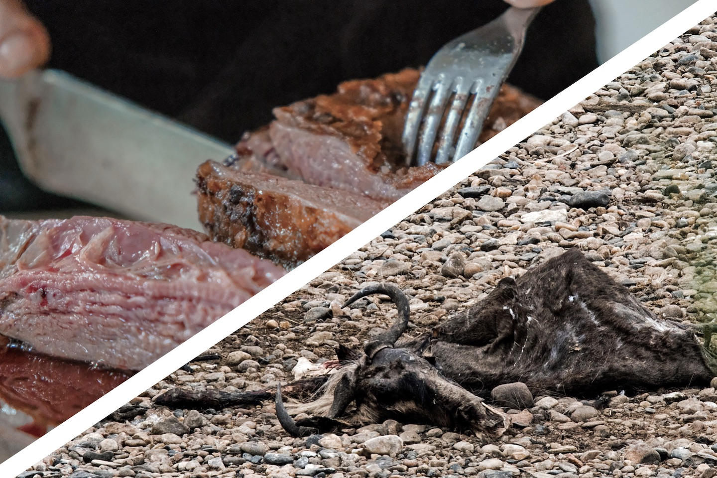 Meat and Climate Change