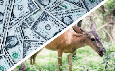 Index Like You Care: Sustainable Investing with Vegan ETF