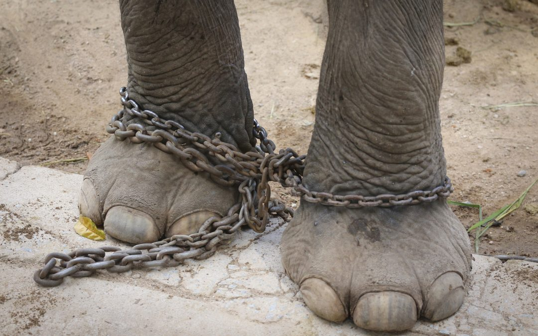Animals in Entertainment: Is Our Amusement Worth Their Suffering?