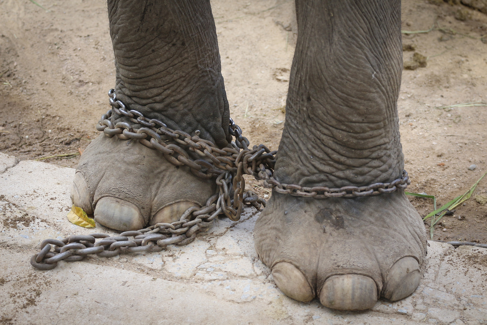 Animals in Entertainment: Why Are Animals Used for Entertainment?