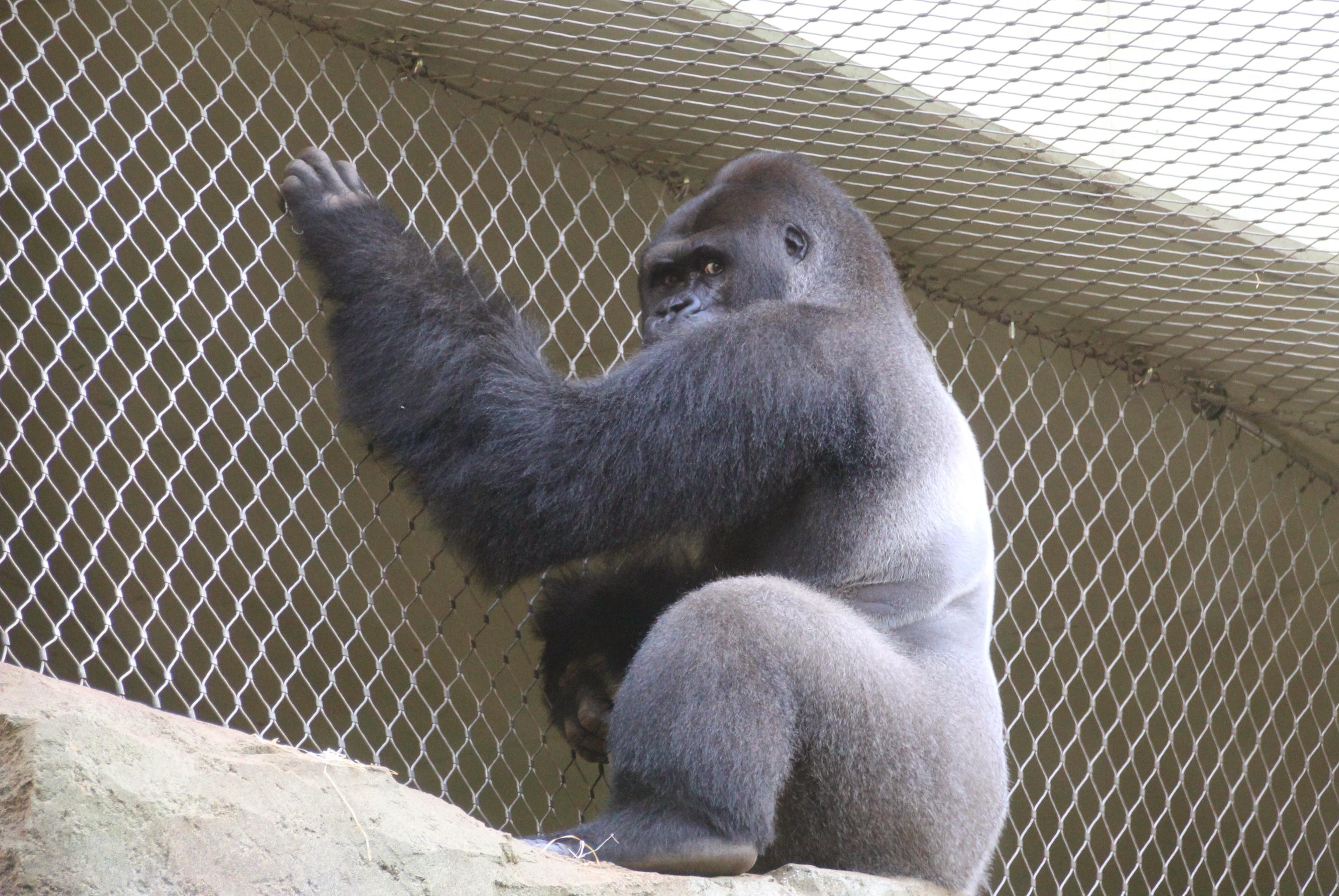 Animals Kept In Zoos