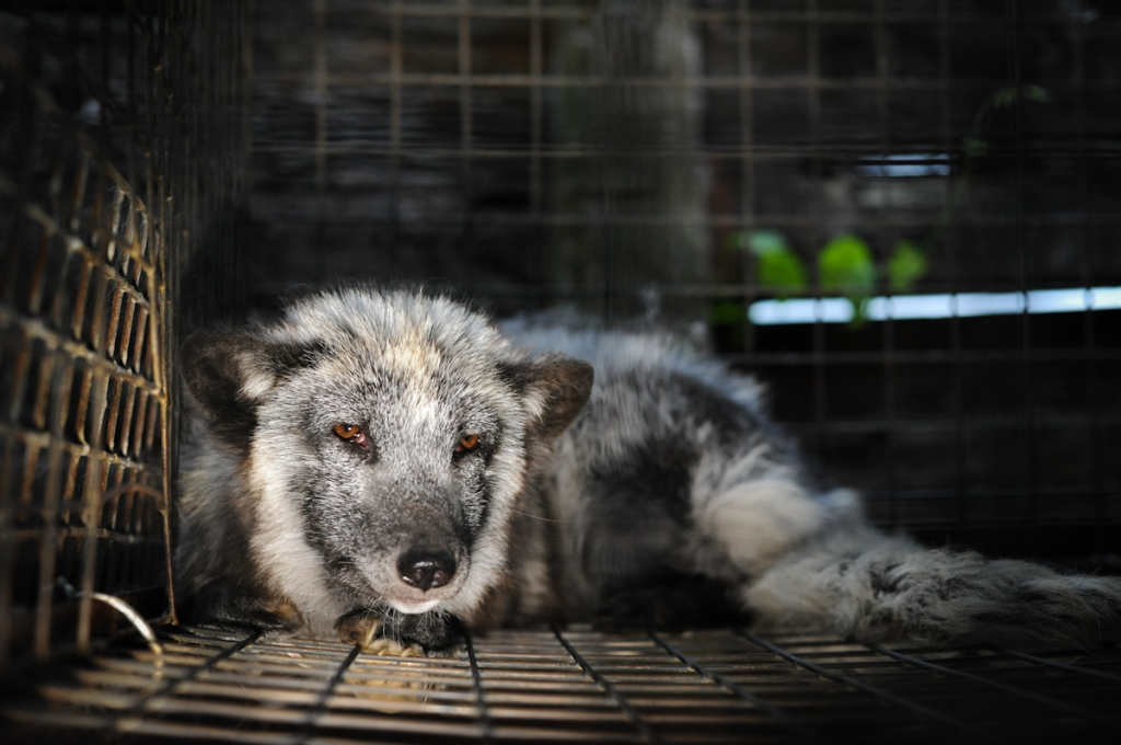 California Just Became the First U.S. State to Ban Fur Products. Who Will Follow?