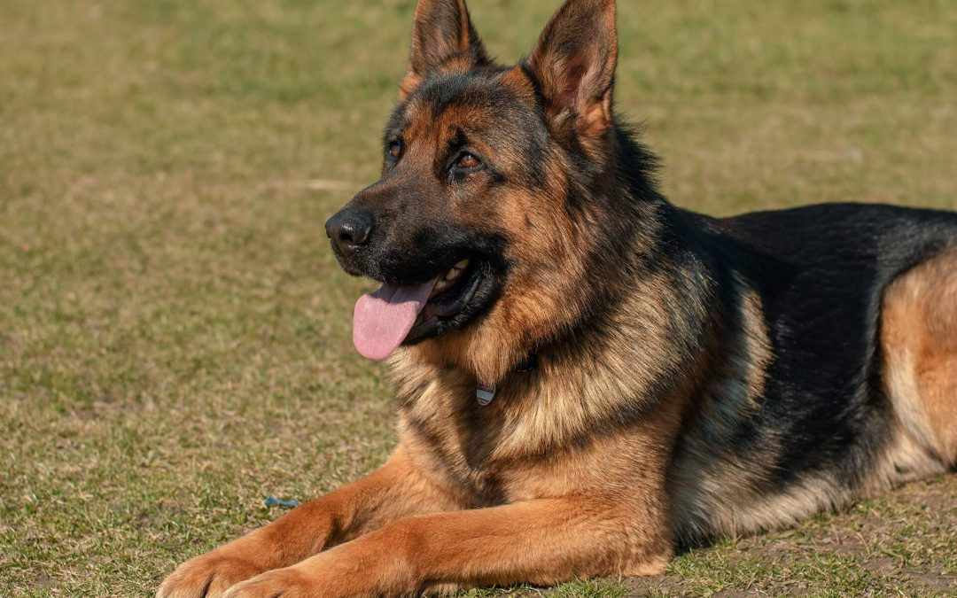Police Dogs: A Necessity or a Disservice