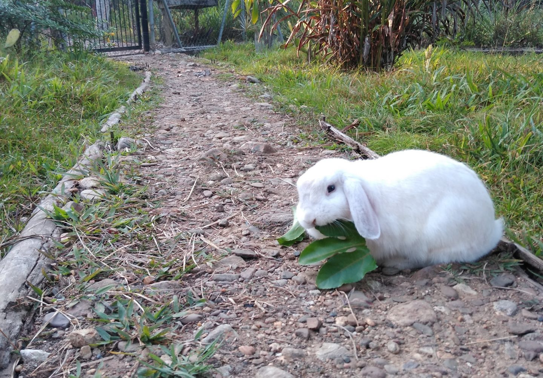 bunny companion animals