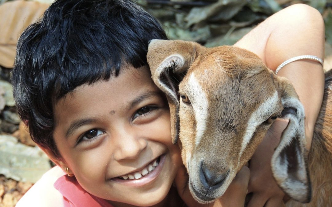 How We Introduce Animals to Children: A Story of Hypocrisy