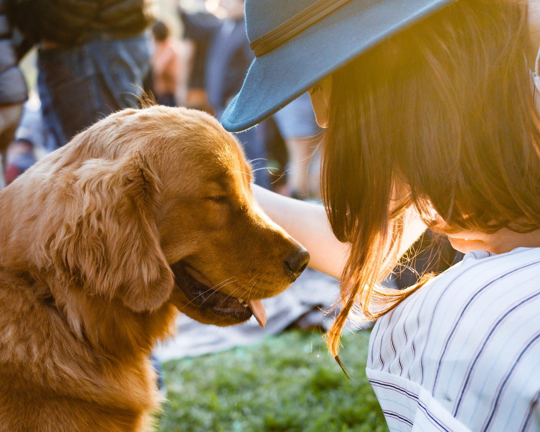 dog animal companion