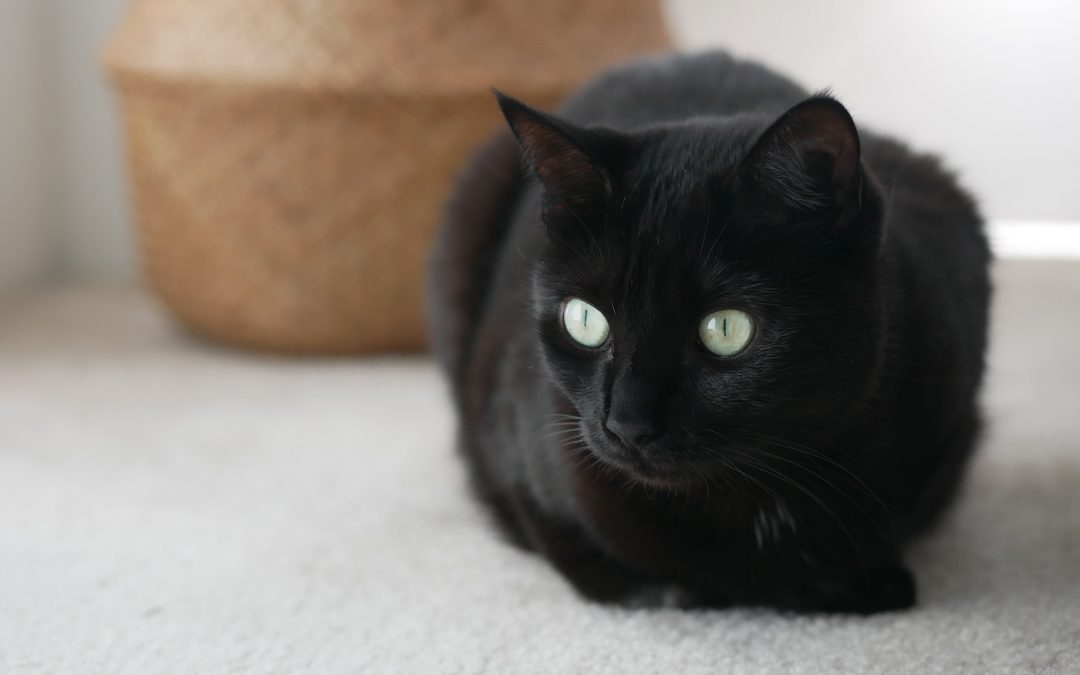 Our Companions: Mimi The Cat