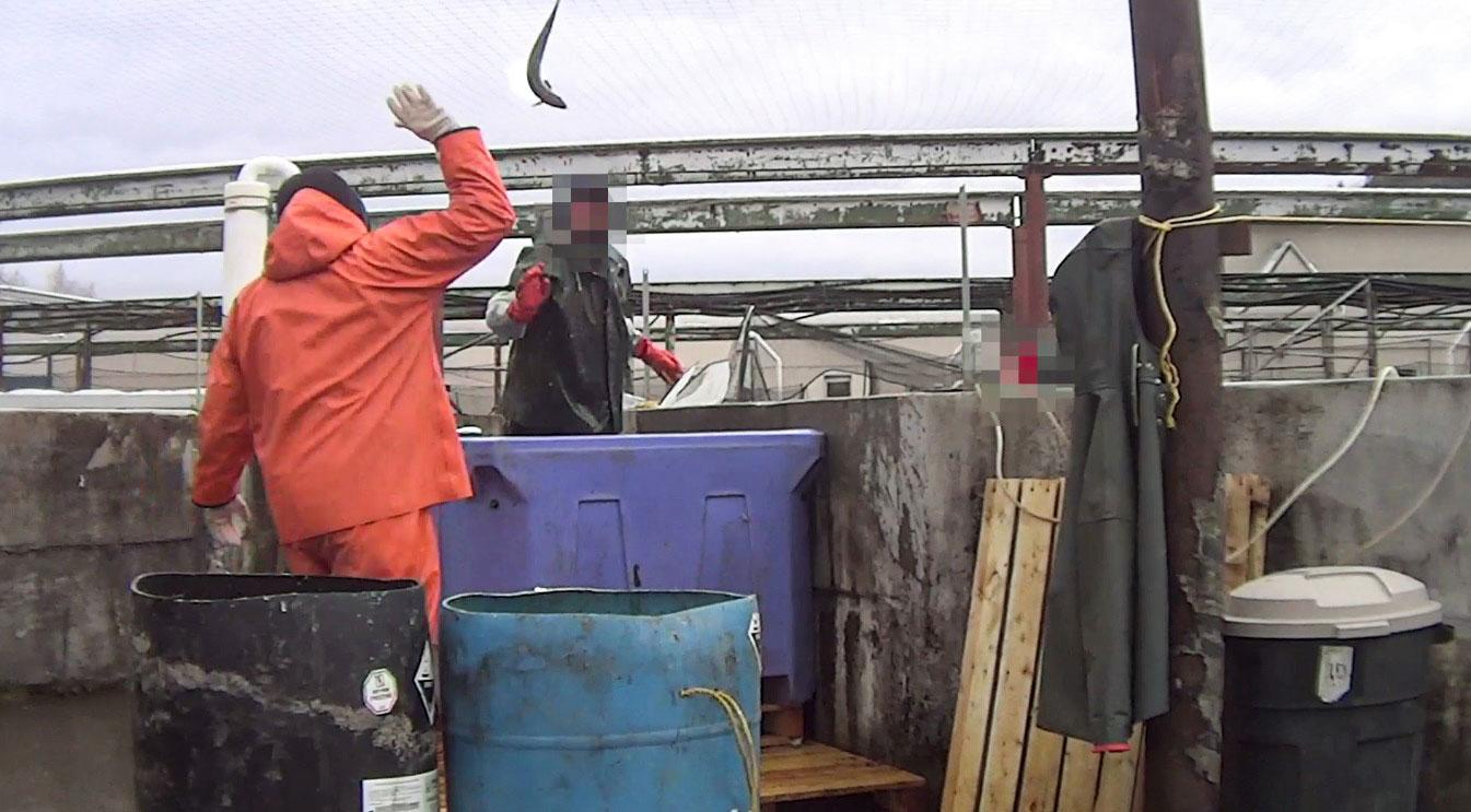 fish cruel worker