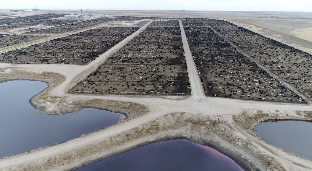 Cattle feedlot with pollution