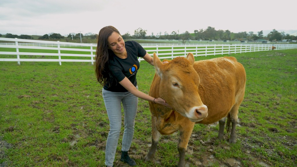Mercy For Animals: Interview with President Leah Garcés