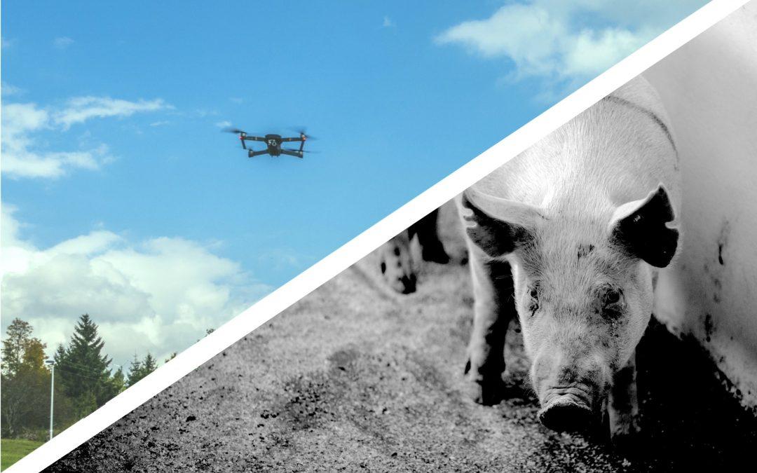 Ag-Gag Laws Keep Animal Farming in the Dark and Diminish Public Trust