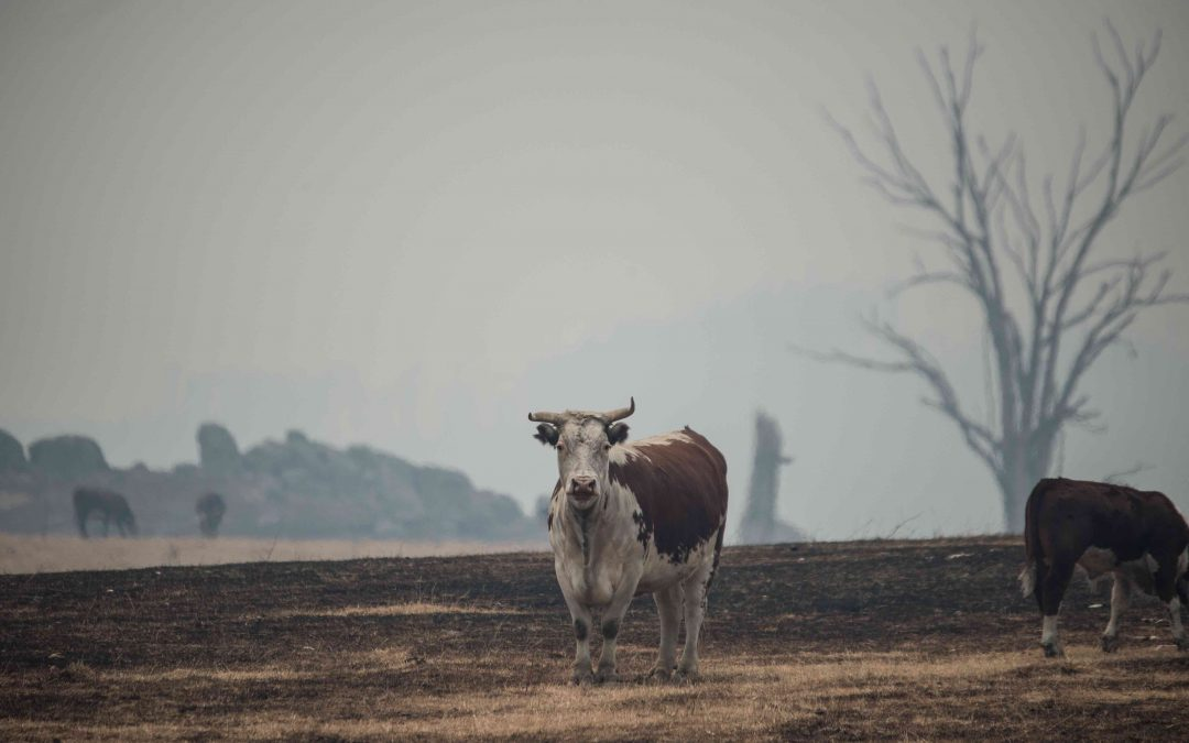 Australia Fires: Uncovering the Devastating Impact on Farmed Animals