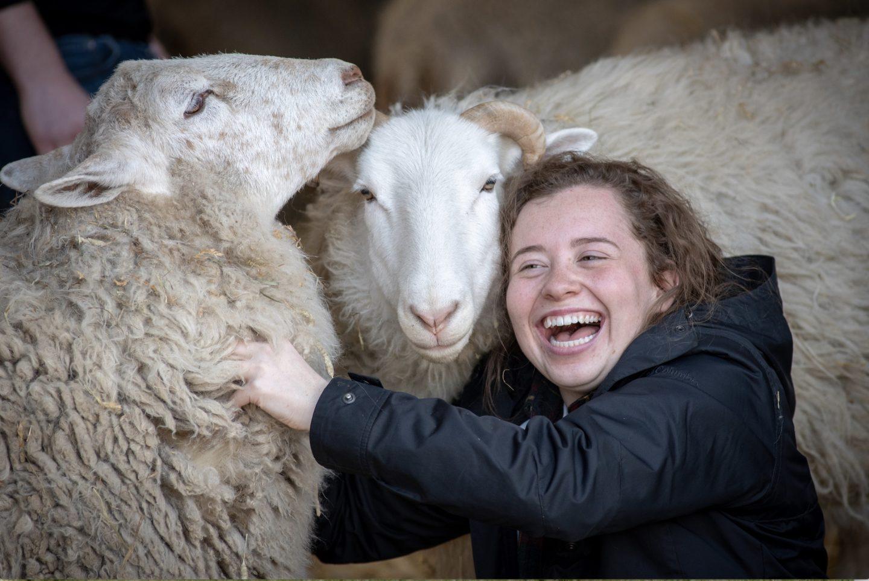 kid sheep sanctuary