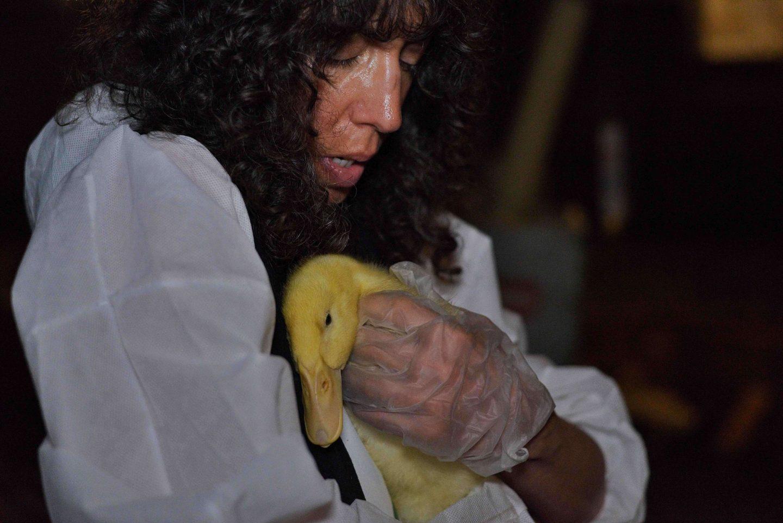 duck rescue activist