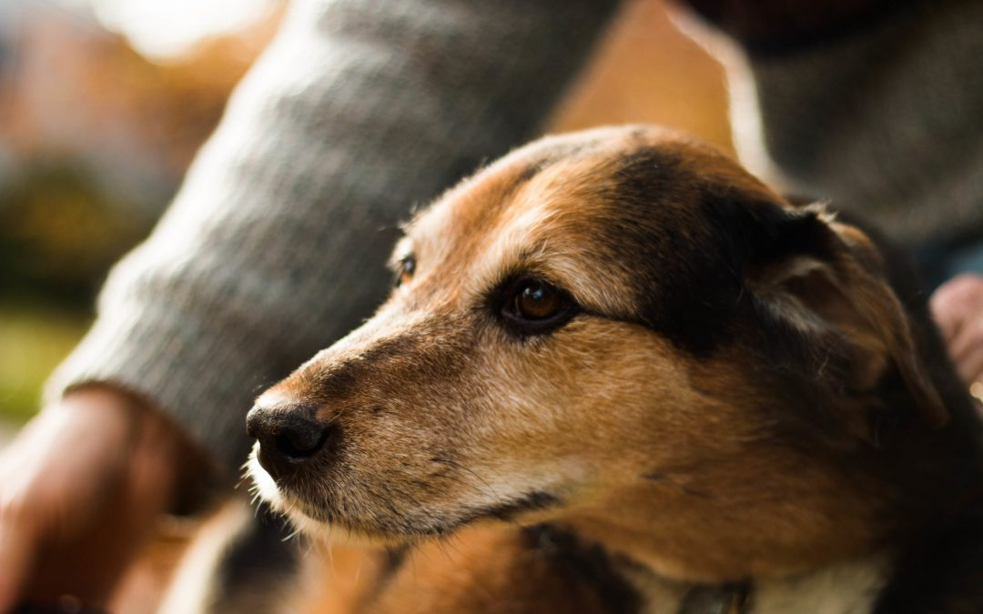 Smells Like Trouble: Do Pets Feel Our Stress?